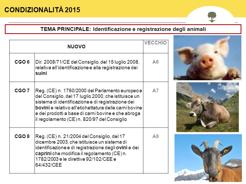 37 TEMA PRINCIPALE: Identificazione e registrazione degli animali NUOVO VECCHIO CGO 6Dir.