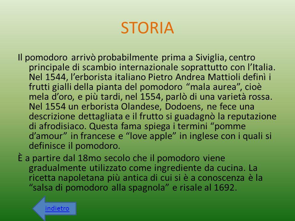 STORIA Il pomodoro arrivò probabilmente prima a Siviglia, centro principale di scambio internazionale soprattutto con l'Italia. Nel 1544, l'erborista