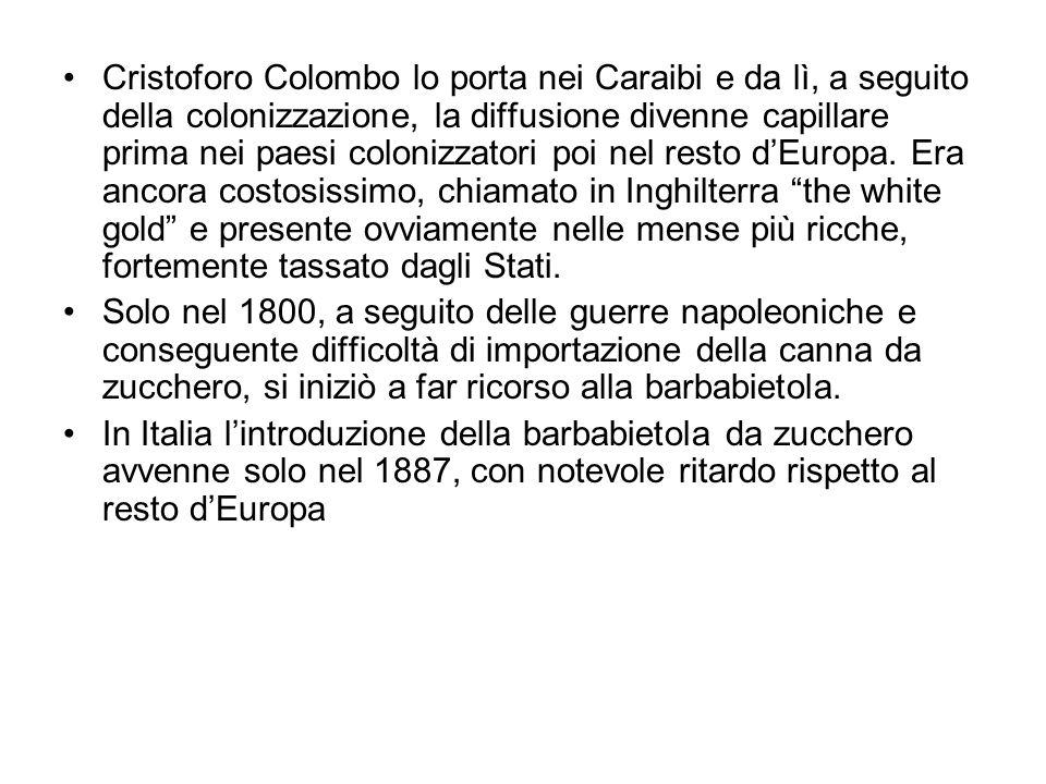 Cristoforo Colombo lo porta nei Caraibi e da lì, a seguito della colonizzazione, la diffusione divenne capillare prima nei paesi colonizzatori poi nel resto d'Europa.