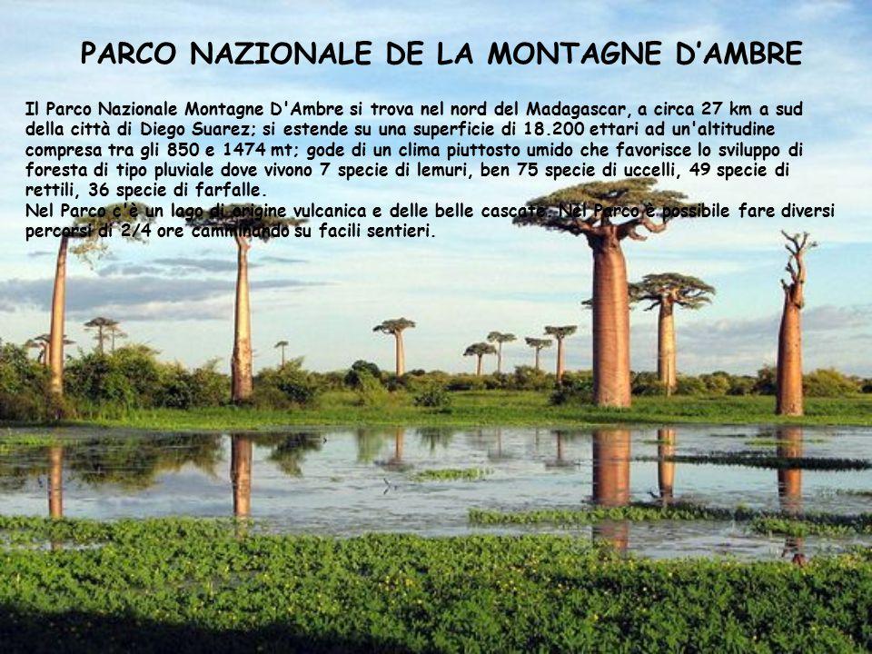 PARCO NAZIONALE DE LA MONTAGNE D'AMBRE Il Parco Nazionale Montagne D'Ambre si trova nel nord del Madagascar, a circa 27 km a sud della città di Diego