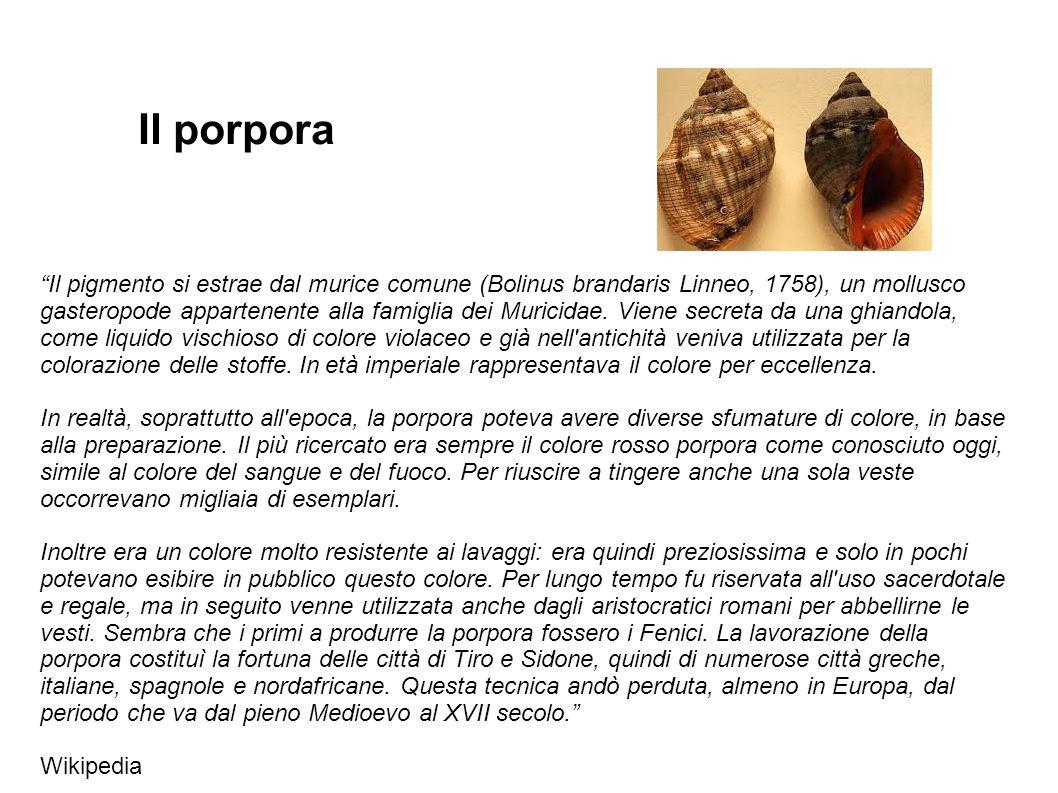 """""""Il pigmento si estrae dal murice comune (Bolinus brandaris Linneo, 1758), un mollusco gasteropode appartenente alla famiglia dei Muricidae. Viene sec"""