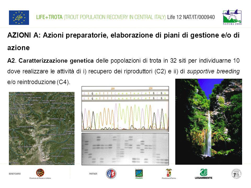 7 AZIONI A: Azioni preparatorie, elaborazione di piani di gestione e/o di azione A2. Caratterizzazione genetica delle popolazioni di trota in 32 siti