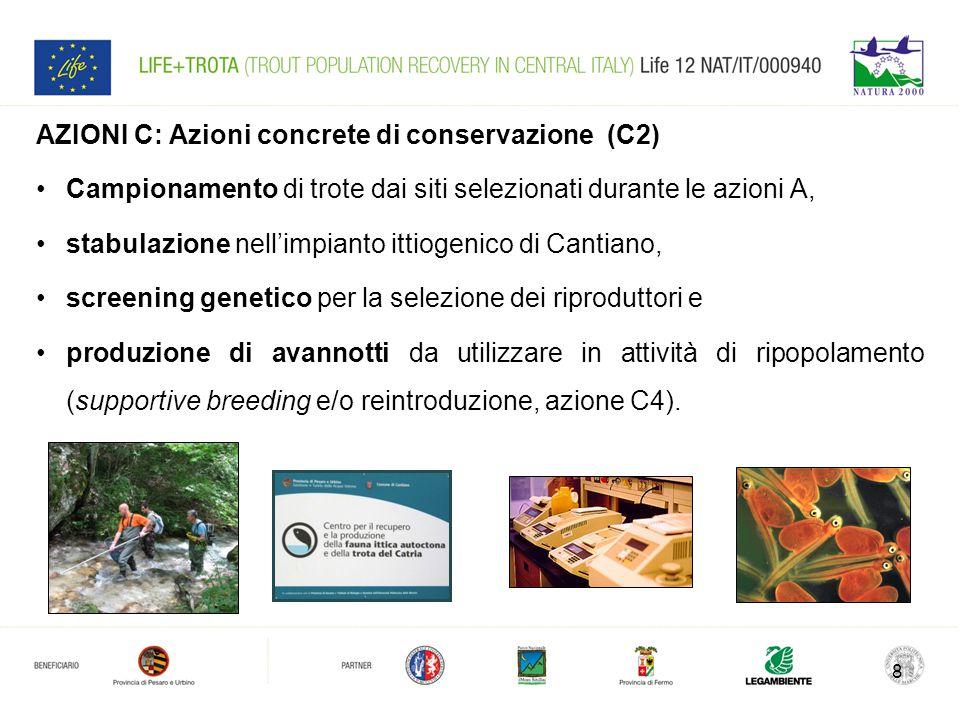 8 AZIONI C: Azioni concrete di conservazione (C2) Campionamento di trote dai siti selezionati durante le azioni A, stabulazione nell'impianto ittiogen