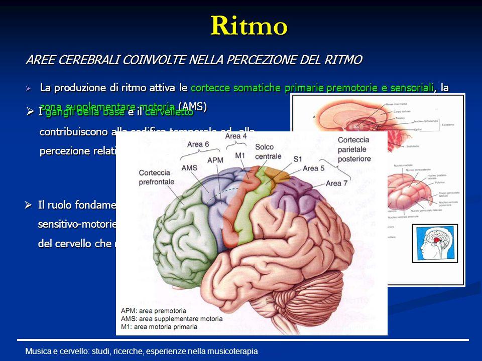 Ritmo  La produzione di ritmo attiva le cortecce somatiche primarie premotorie e sensoriali, la zona supplementare motoria (AMS) Musica e cervello: s