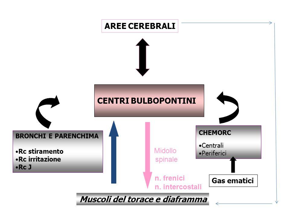 CENTRI BULBOPONTINI AREE CEREBRALI CHEMORC CentraliCentrali PerifericiPeriferici BRONCHI E PARENCHIMA Rc stiramento Rc irritazione Rc J Gas ematici Mu