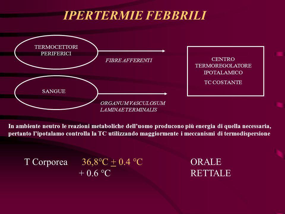 T Corporea 36,8°C + 0.4 °C ORALE + 0.6 °C RETTALE TERMOCETTORI PERIFERICI SANGUE FIBRE AFFERENTI ORGANUM VASCULOSUM LAMINAE TERMINALIS CENTRO TERMOREGOLATORE IPOTALAMICO TC COSTANTE In ambiente neutro le reazioni metaboliche dell'uomo producono più energia di quella necessaria, pertanto l'ipotalamo controlla la TC utilizzando maggiormente i meccanismi di termodispersione IPERTERMIE FEBBRILI