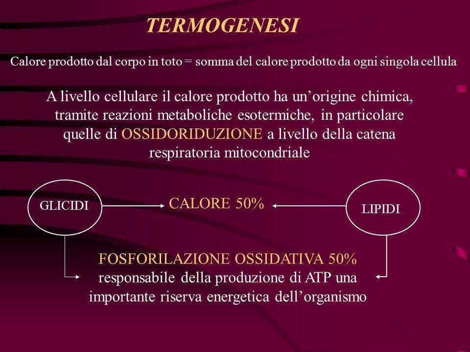 TERMOGENESI Calore prodotto dal corpo in toto = somma del calore prodotto da ogni singola cellula A livello cellulare il calore prodotto ha un'origine