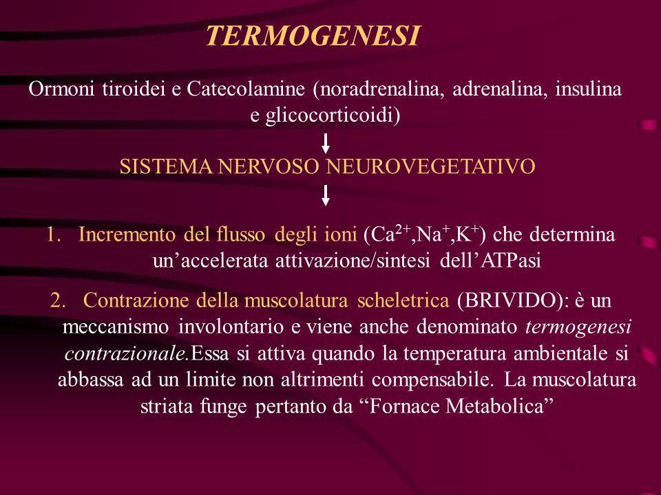 Ormoni tiroidei e Catecolamine (noradrenalina, adrenalina, insulina e glicocorticoidi) 1.Incremento del flusso degli ioni (Ca 2+,Na +,K + ) che determ