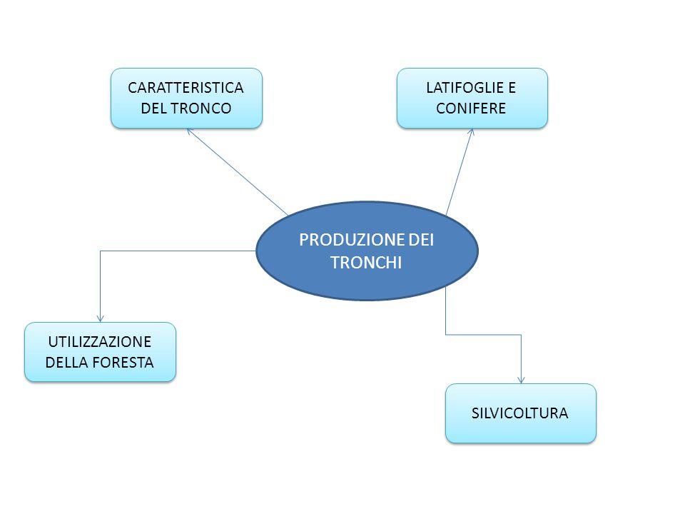 PRODUZIONE DEI TRONCHI CARATTERISTICA DEL TRONCO SILVICOLTURA LATIFOGLIE E CONIFERE UTILIZZAZIONE DELLA FORESTA