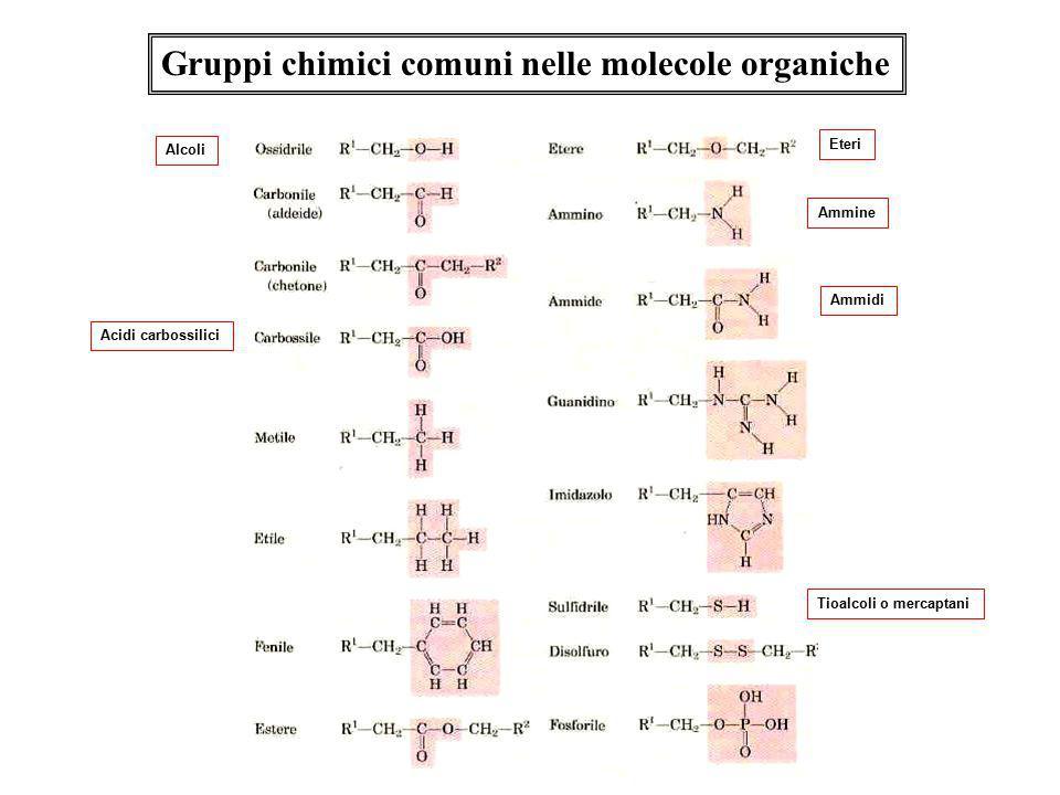 Gruppi chimici comuni nelle molecole organiche Alcoli Acidi carbossilici Eteri Ammine Ammidi Tioalcoli o mercaptani