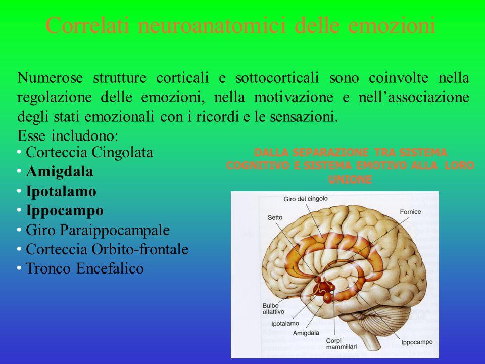 Correlati neuroanatomici delle emozioni Numerose strutture corticali e sottocorticali sono coinvolte nella regolazione delle emozioni, nella motivazione e nell'associazione degli stati emozionali con i ricordi e le sensazioni.