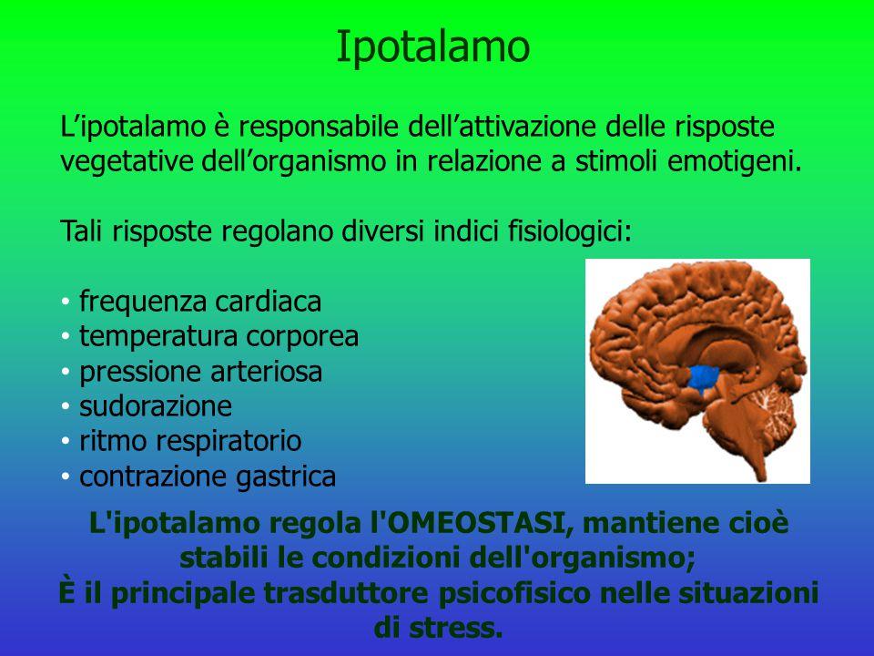 Ipotalamo L'ipotalamo è responsabile dell'attivazione delle risposte vegetative dell'organismo in relazione a stimoli emotigeni. Tali risposte regolan