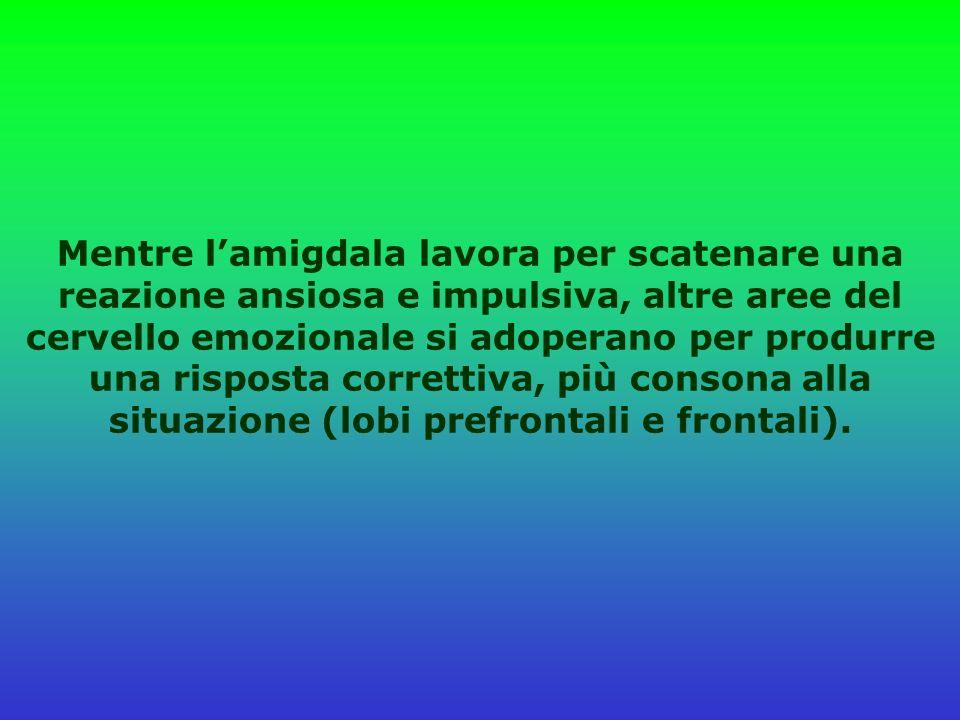 Mentre l'amigdala lavora per scatenare una reazione ansiosa e impulsiva, altre aree del cervello emozionale si adoperano per produrre una risposta correttiva, più consona alla situazione (lobi prefrontali e frontali).