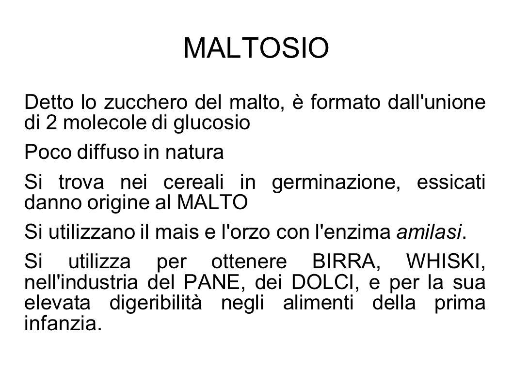 MALTOSIO Detto lo zucchero del malto, è formato dall unione di 2 molecole di glucosio Poco diffuso in natura Si trova nei cereali in germinazione, essicati danno origine al MALTO Si utilizzano il mais e l orzo con l enzima amilasi.