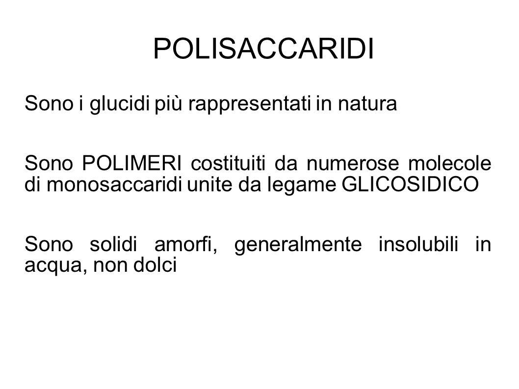 POLISACCARIDI Sono i glucidi più rappresentati in natura Sono POLIMERI costituiti da numerose molecole di monosaccaridi unite da legame GLICOSIDICO Sono solidi amorfi, generalmente insolubili in acqua, non dolci