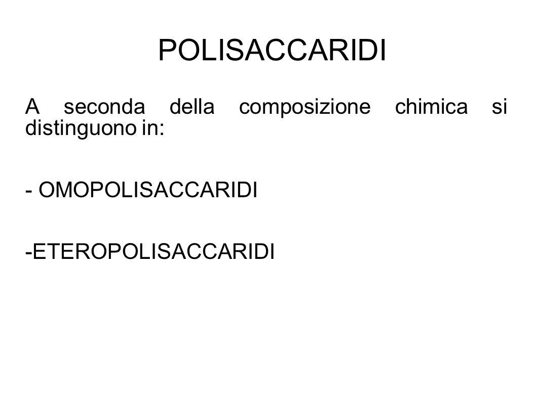 POLISACCARIDI A seconda della composizione chimica si distinguono in: - OMOPOLISACCARIDI -ETEROPOLISACCARIDI