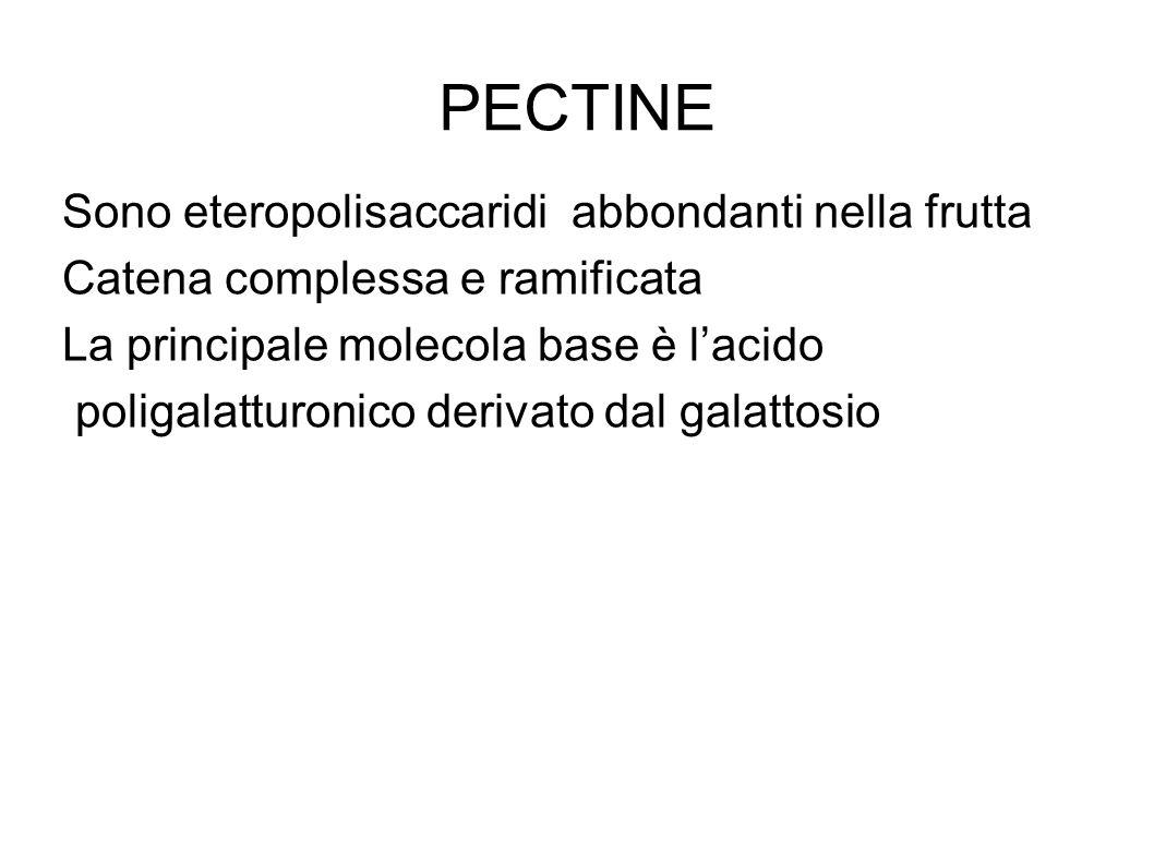 PECTINE Sono eteropolisaccaridi abbondanti nella frutta Catena complessa e ramificata La principale molecola base è l'acido poligalatturonico derivato dal galattosio
