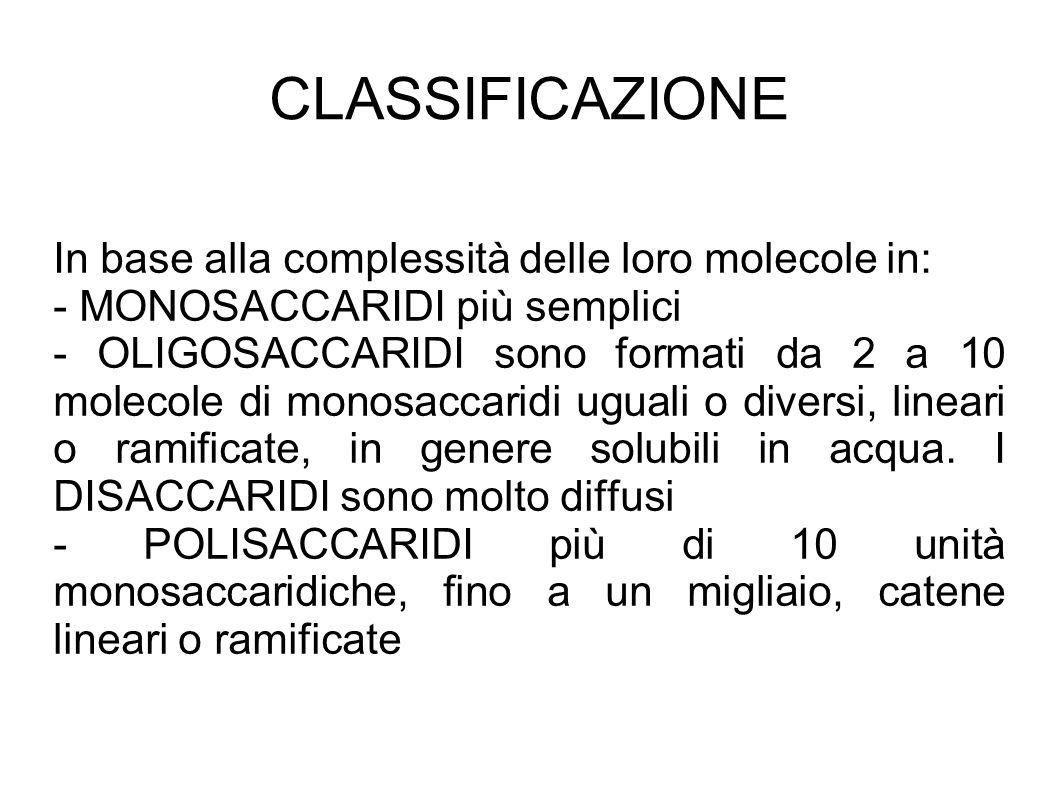 CLASSIFICAZIONE In base alla complessità delle loro molecole in: - MONOSACCARIDI più semplici - OLIGOSACCARIDI sono formati da 2 a 10 molecole di monosaccaridi uguali o diversi, lineari o ramificate, in genere solubili in acqua.