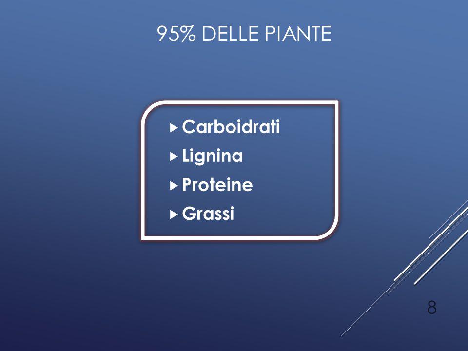 95% DELLE PIANTE  Carboidrati  Lignina  Proteine  Grassi 8