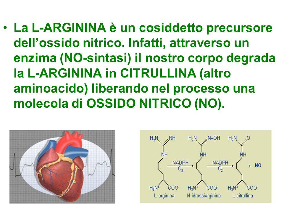La L-ARGININA è un cosiddetto precursore dell'ossido nitrico. Infatti, attraverso un enzima (NO-sintasi) il nostro corpo degrada la L-ARGININA in CITR