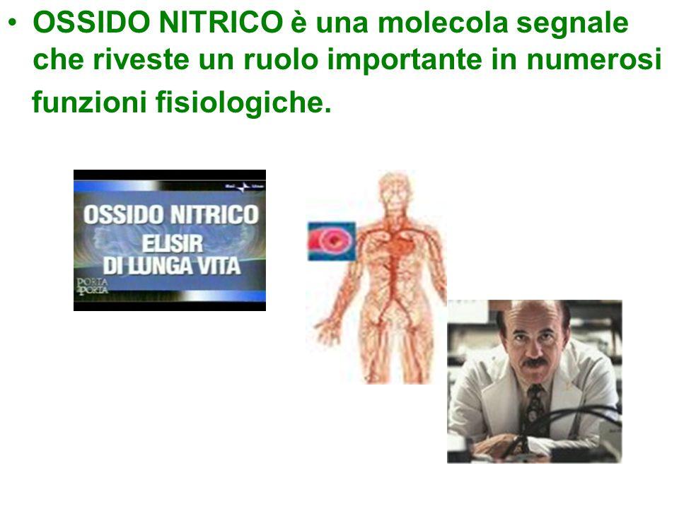 OSSIDO NITRICO è una molecola segnale che riveste un ruolo importante in numerosi funzioni fisiologiche.