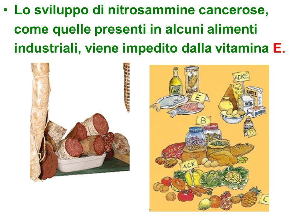 Lo sviluppo di nitrosammine cancerose, come quelle presenti in alcuni alimenti industriali, viene impedito dalla vitamina E.