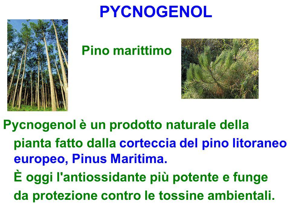 PYCNOGENOL Pino marittimo Pycnogenol è un prodotto naturale della pianta fatto dalla corteccia del pino litoraneo europeo, Pinus Maritima. È oggi l'an