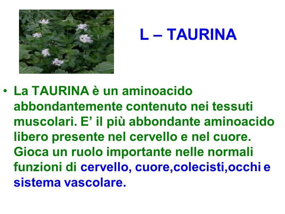 L – TAURINA La TAURINA è un aminoacido abbondantemente contenuto nei tessuti muscolari. E' il più abbondante aminoacido libero presente nel cervello e