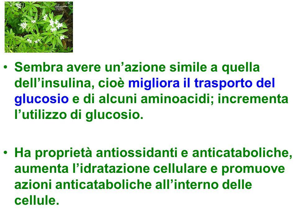Sembra avere un'azione simile a quella dell'insulina, cioè migliora il trasporto del glucosio e di alcuni aminoacidi; incrementa l'utilizzo di glucosio.