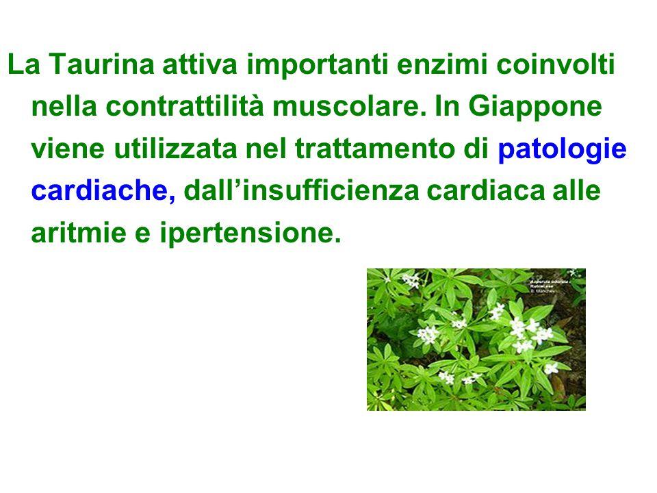 La Taurina attiva importanti enzimi coinvolti nella contrattilità muscolare. In Giappone viene utilizzata nel trattamento di patologie cardiache, dall