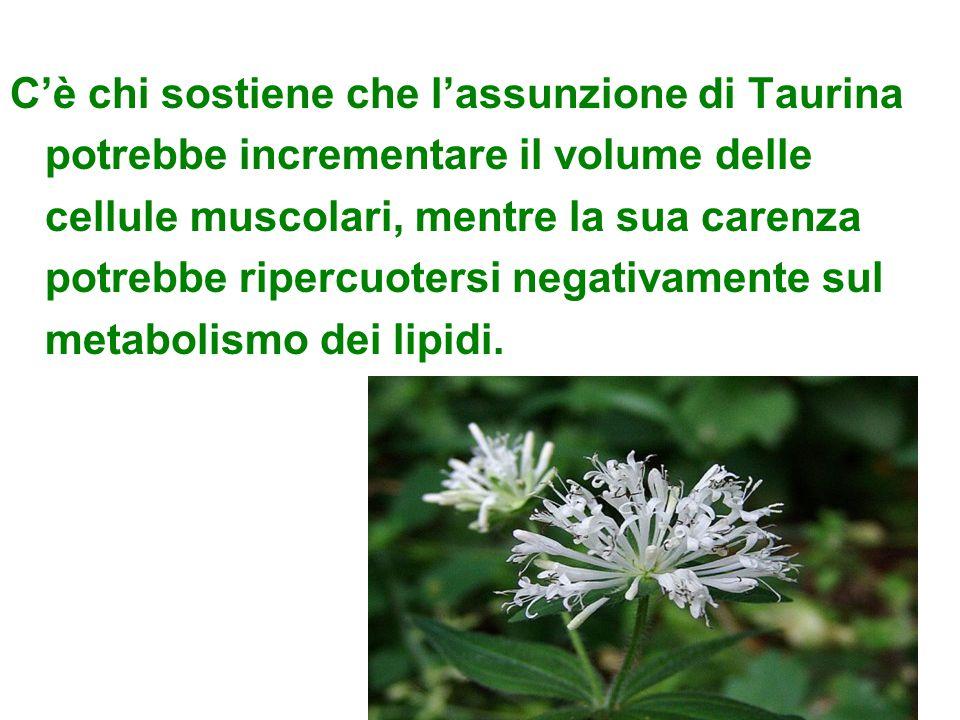 C'è chi sostiene che l'assunzione di Taurina potrebbe incrementare il volume delle cellule muscolari, mentre la sua carenza potrebbe ripercuotersi negativamente sul metabolismo dei lipidi.