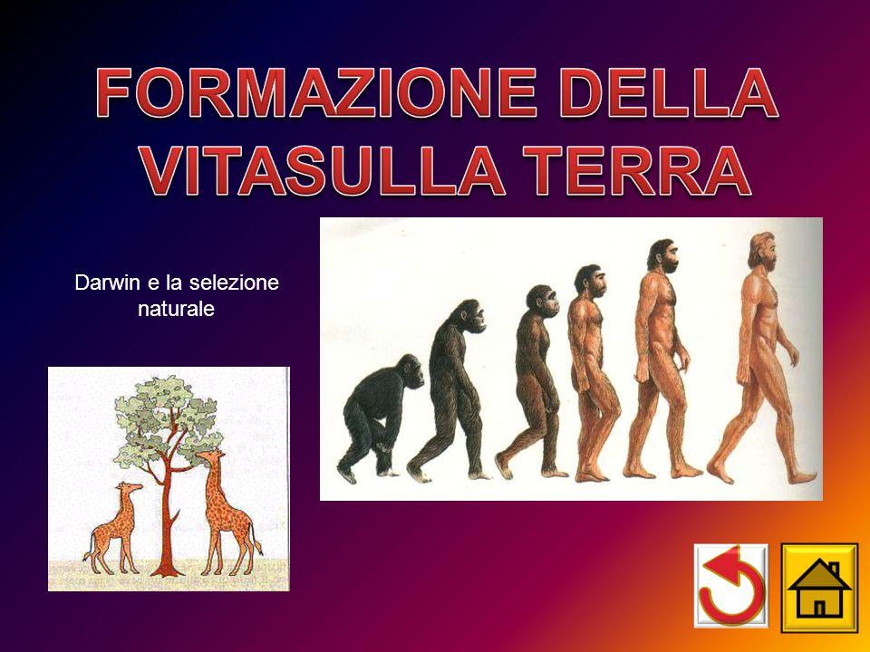 Darwin e la selezione naturale