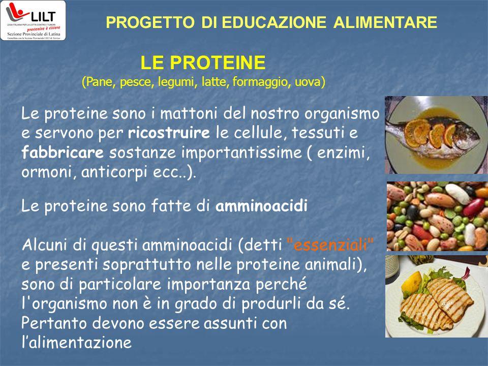 LE PROTEINE (Pane, pesce, legumi, latte, formaggio, uova) Le proteine sono i mattoni del nostro organismo e servono per ricostruire le cellule, tessut
