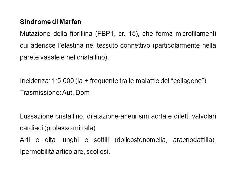 Sindrome di Marfan Mutazione della fibrillina (FBP1, cr. 15), che forma microfilamenti cui aderisce l'elastina nel tessuto connettivo (particolarmente