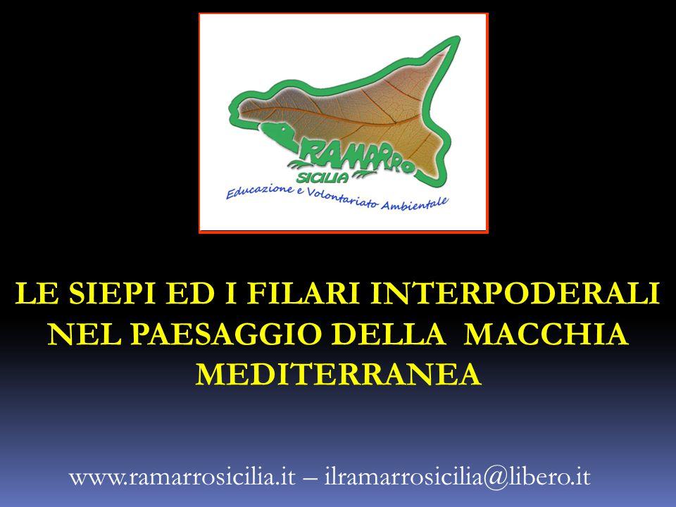 LE SIEPI ED I FILARI INTERPODERALI NEL PAESAGGIO DELLA MACCHIA MEDITERRANEA www.ramarrosicilia.it – ilramarrosicilia@libero.it