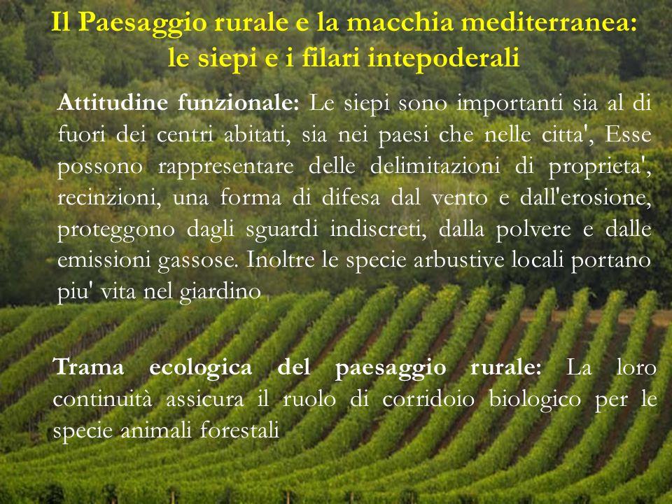 Il Paesaggio rurale e la macchia mediterranea: le siepi e i filari intepoderali Trama ecologica del paesaggio rurale: La loro continuità assicura il r