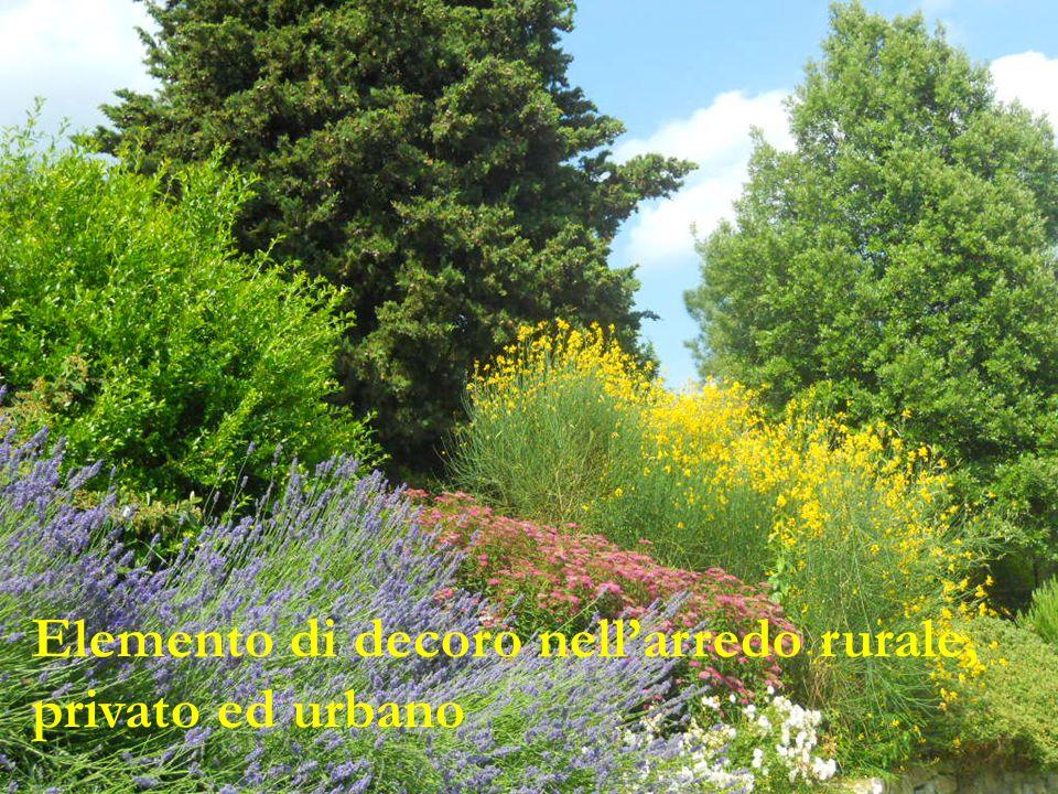 Elemento di decoro nell'arredo rurale, privato ed urbano