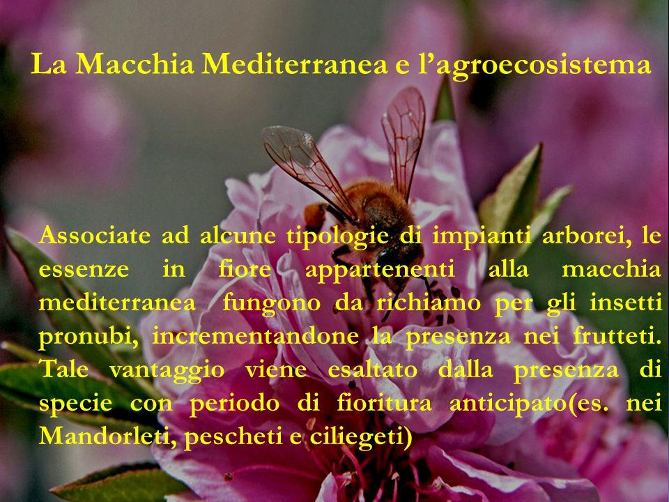 Associate ad alcune tipologie di impianti arborei, le essenze in fiore appartenenti alla macchia mediterranea fungono da richiamo per gli insetti pronubi, incrementandone la presenza nei frutteti.