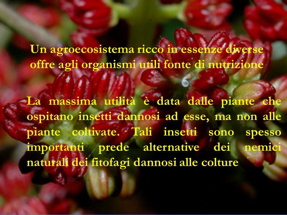 Un agroecosistema ricco in essenze diverse offre agli organismi utili fonte di nutrizione La massima utilità è data dalle piante che ospitano insetti