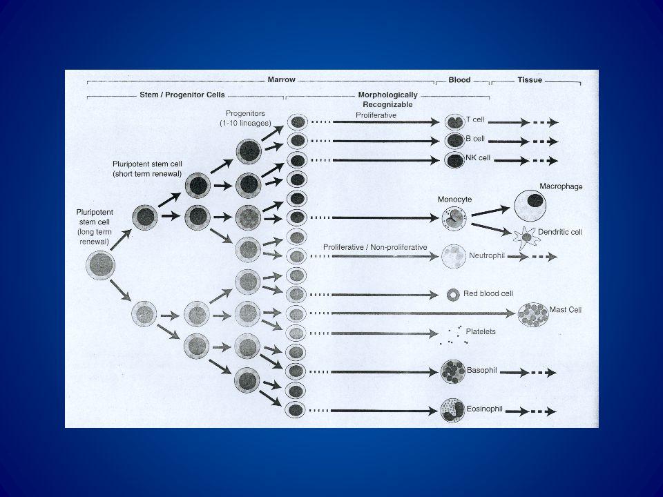 Basofili Eosinofili Neutrofili MonocitiPiastrine Eritrociti T-Cell B-Cell Eritroblasti Megacarioblasto MonoblastoMieloblasto Promieloblasto CFU-EOS CFU-GM CFU-M CFU-Mega CFU-GEMM BFU-E T Progenitore B progenitore Cellula staminale linfoide Cellula staminale pluripotente CD34 CD38 CD33 CD8 CD34 CD38 CD34 CD33 CD34 CD41 CD34 CD2 CD7 CD34 CD19 CD34 CD33 CD31 CD34 CD33 CD13 CD4 CD38 - I settori della fabbrica emopoiesi