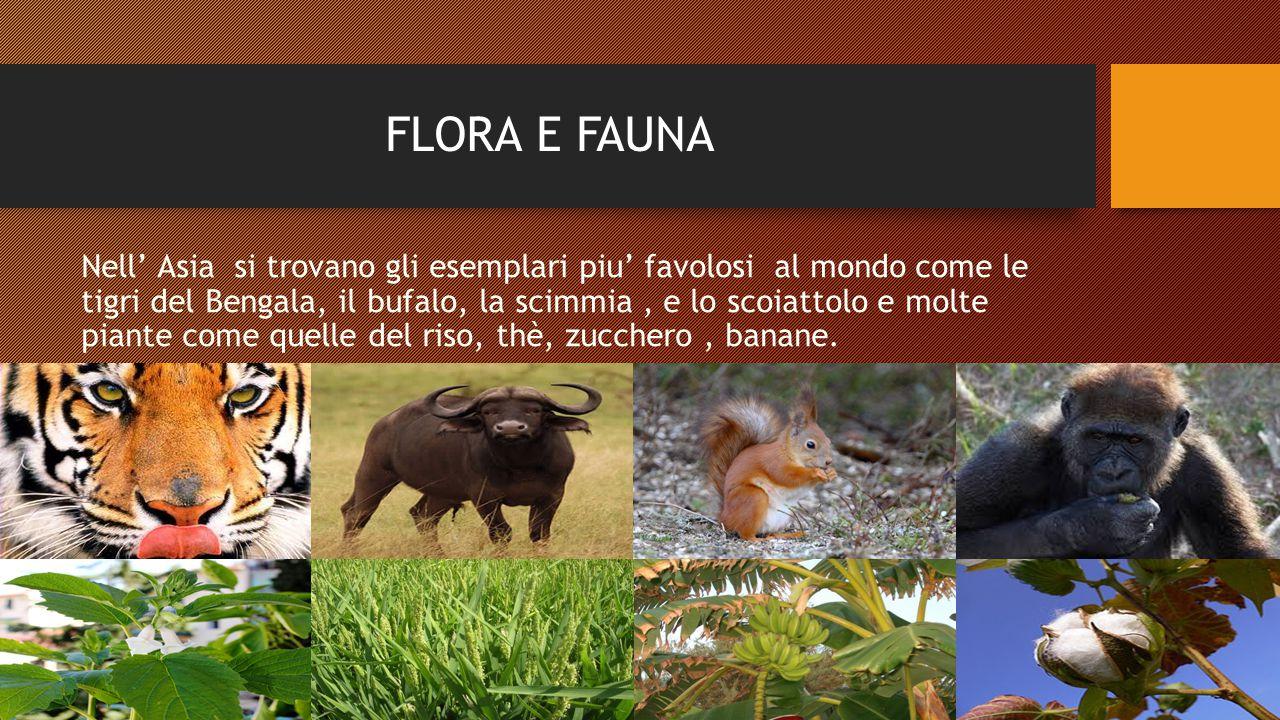 FLORA E FAUNA Nell' Asia si trovano gli esemplari piu' favolosi al mondo come le tigri del Bengala, il bufalo, la scimmia, e lo scoiattolo e molte piante come quelle del riso, thè, zucchero, banane.
