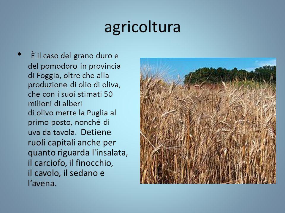 agricoltura È il caso del grano duro e del pomodoro in provincia di Foggia, oltre che alla produzione di olio di oliva, che con i suoi stimati 50 milioni di alberi di olivo mette la Puglia al primo posto, nonché di uva da tavola.