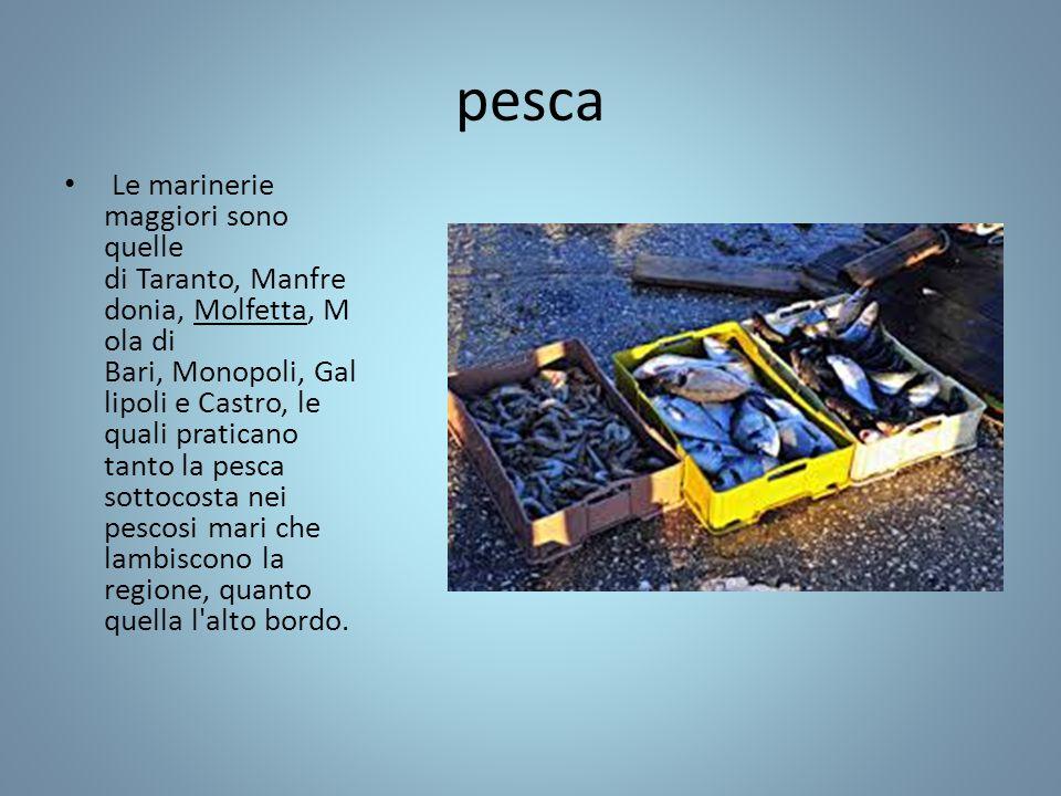 pesca Le marinerie maggiori sono quelle di Taranto, Manfre donia, Molfetta, M ola di Bari, Monopoli, Gal lipoli e Castro, le quali praticano tanto la pesca sottocosta nei pescosi mari che lambiscono la regione, quanto quella l alto bordo.