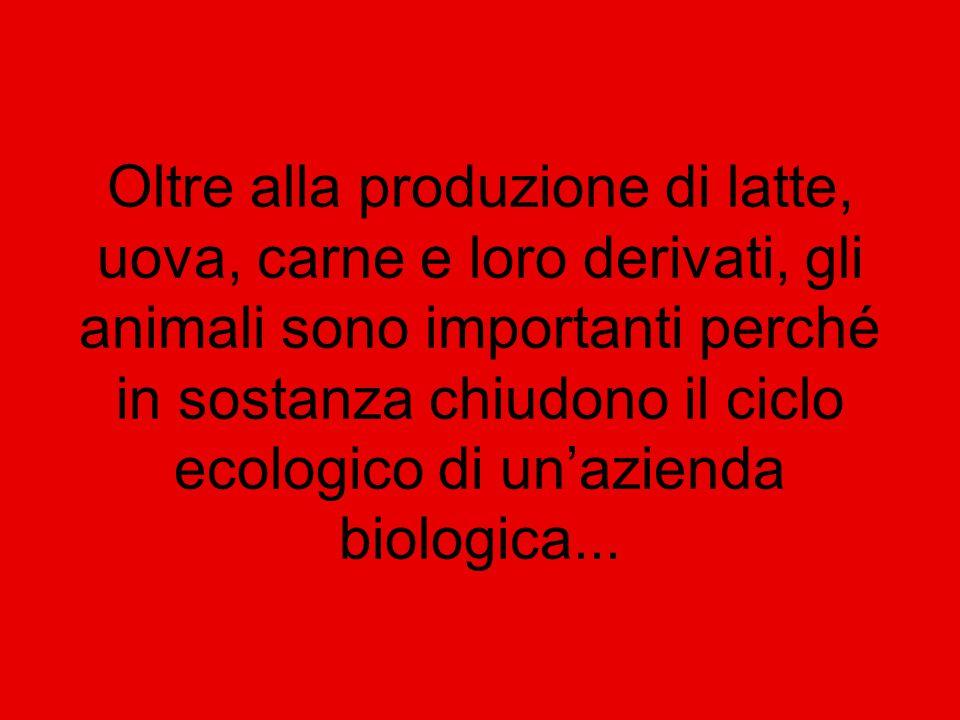 Oltre alla produzione di latte, uova, carne e loro derivati, gli animali sono importanti perché in sostanza chiudono il ciclo ecologico di un'azienda biologica...
