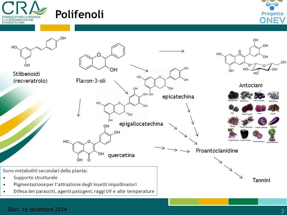 3 Stilbenoidi (resveratrolo) Flavon-3-oli epicatechina epigallocatechina Proantocianidine quercetina Antociani Tannini Polifenoli Sono metaboliti secondari della pianta: Supporto strutturale Pigmentazione per l'attrazione degli insetti impollinatori Difesa dei parassiti, agenti patogeni, raggi UV e alte temperature