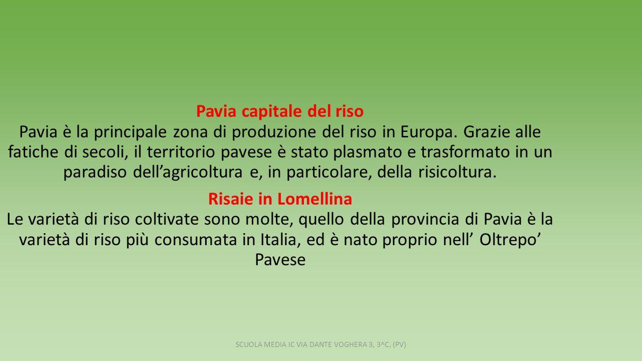 Pavia capitale del riso Pavia è la principale zona di produzione del riso in Europa.