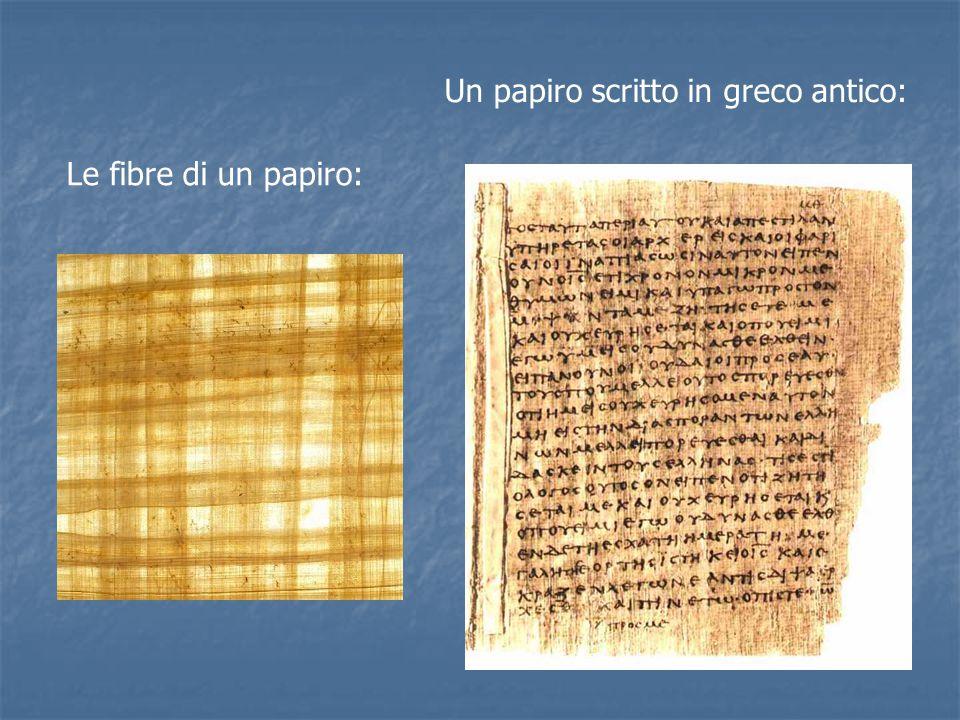 Le fibre di un papiro: Un papiro scritto in greco antico: