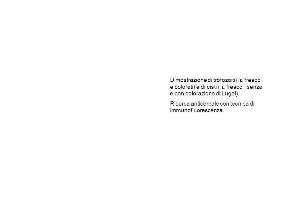 Dimostrazione di trofozoiti ( a fresco e colorati) e di cisti ( a fresco , senza e con colorazione di Lugol).