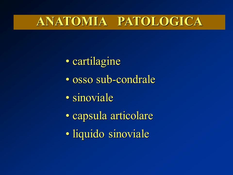 ANATOMIA PATOLOGICA cartilagine cartilagine osso sub-condrale osso sub-condrale sinoviale sinoviale capsula articolare capsula articolare liquido sino