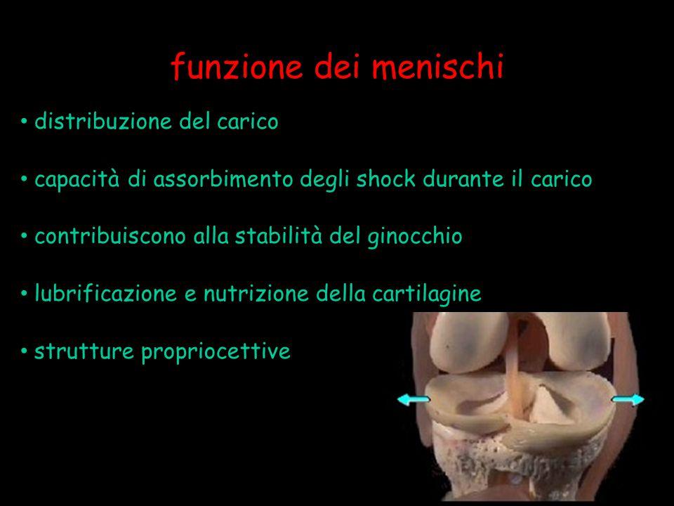funzione dei menischi distribuzione del carico capacità di assorbimento degli shock durante il carico contribuiscono alla stabilità del ginocchio lubr